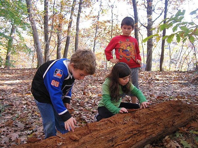 outdoor learning its importance for childrens development Understanding the importance of physical play is vital to your child's development  learning according to the child development institute, 75 percent of brain .